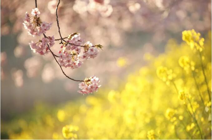 今日春分!我和春天有個約會……