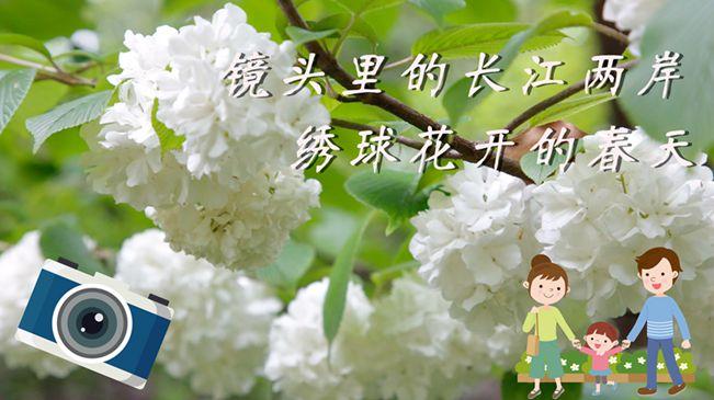 教你拍|鏡頭裏的長江兩岸,繡球花開的春天