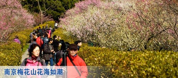 安徽太湖花海风景区