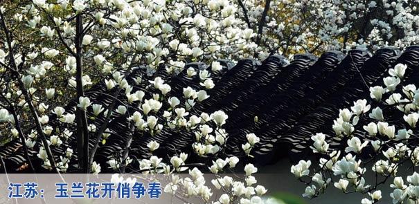 """南京:""""荧光跑""""宣传""""地球一小时"""" 苏州动物园黑天鹅喜添丁 樱花伴仙子"""