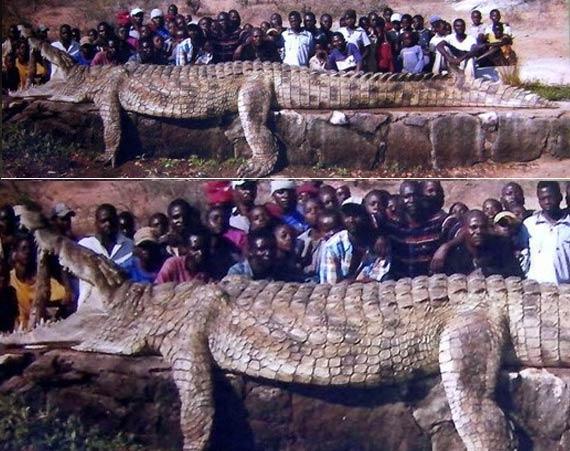"""盘点""""千年成妖""""的动物:最大鳄鱼形如恐龙"""