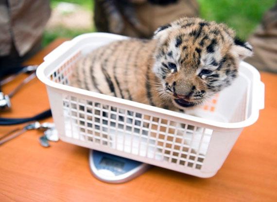动物王国婴儿宝贝可爱卖萌