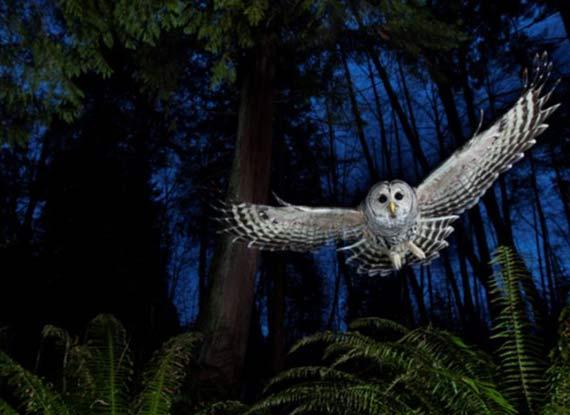 野生动物摄影赛凸显生命美