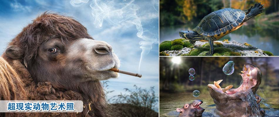 超现实动物艺术照