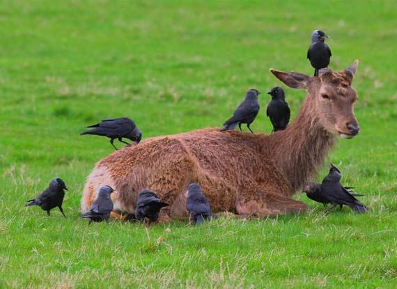 國際攝影大賽展現野生動物生命美