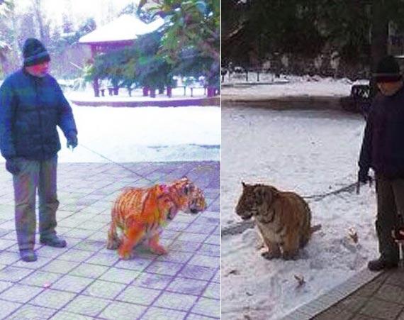 老漢公園遛老虎引圍觀 網友:威武霸氣_圖片頻